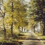 Die alte Allee in Richtung Lütt Hamborg - um 1960